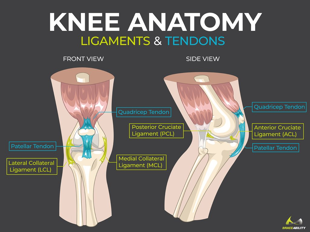 Knee Anatomy Pain Symptoms