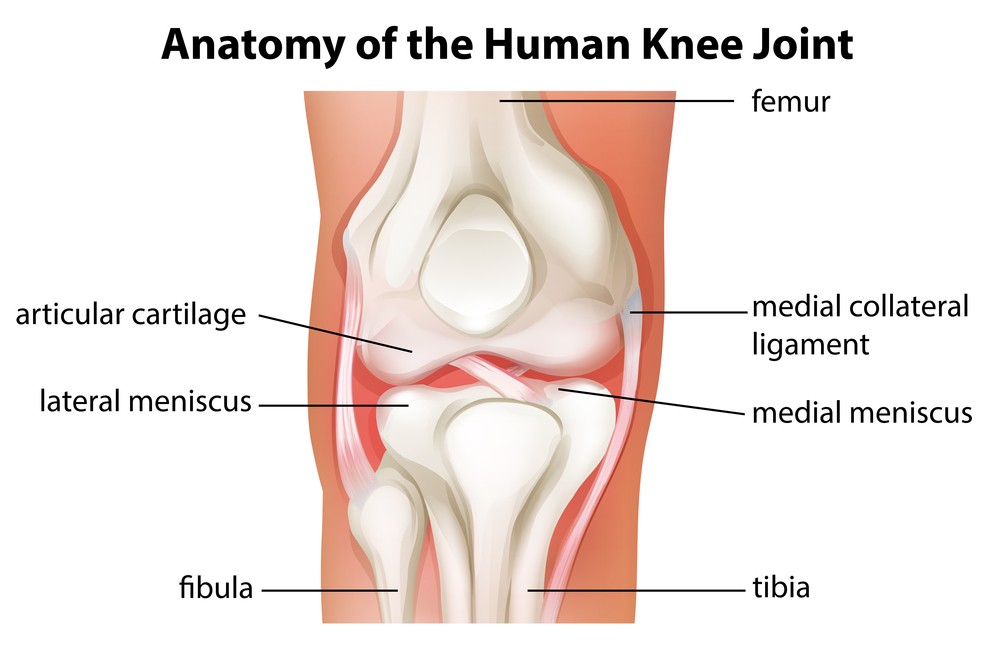 Knee Anatomy Pain Inside