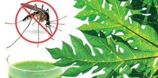 diet tips for dengue patients